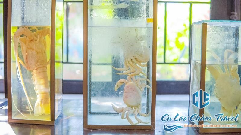 khu bảo tồn biển cù lao chàm